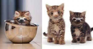 Kittens And Sloths Slittens