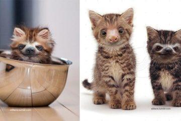 Kittens And Sloths Slittens