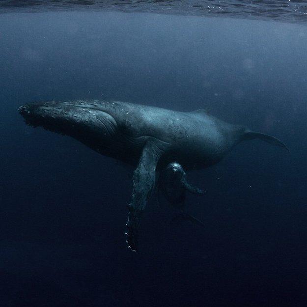 Michaela Skovranova underwater photography mum baby humpback whale