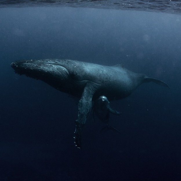 Michaela Skovranova Takes Incredible Underwater Photos Of ...