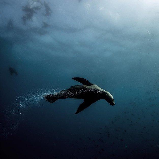 Michaela Skovranova underwater photography seal