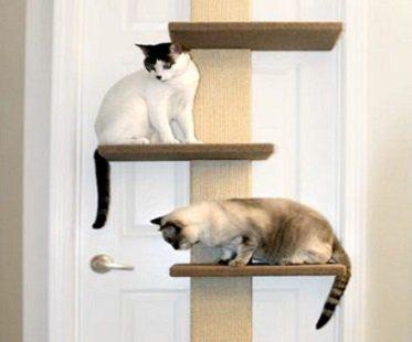 Multi-Level Cat Climber cats