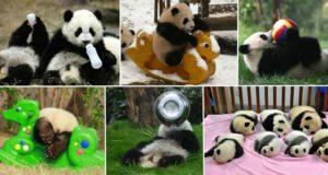 Panda Day Care China