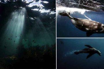 Photographer Takes Underwater Photos