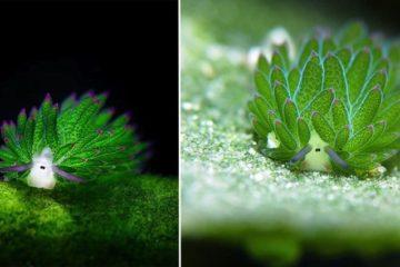 Sea Slug Looks Like A Cartoon Sheep
