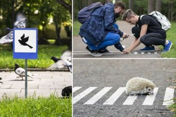 #TINYROADSIGN Project For Animals