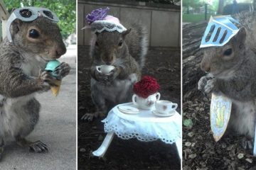 University Student Plays Dress Up With Squirrels
