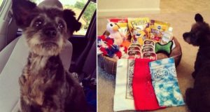 Woman Adopts Dying Dog