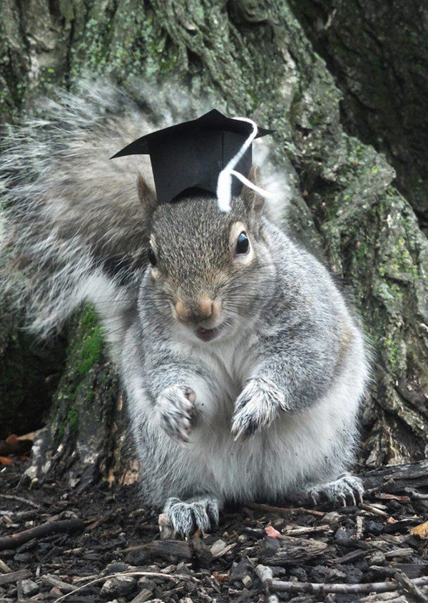 academic squirrel