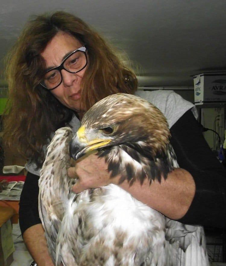 anima-eagle
