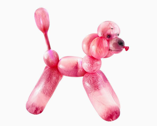 balloon-zoo-by-sarah-deremer-poodle