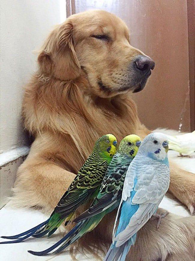birds dog arm