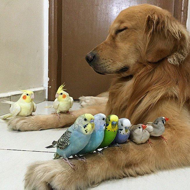 birds dog arms