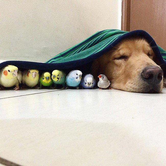 birds dog blanket