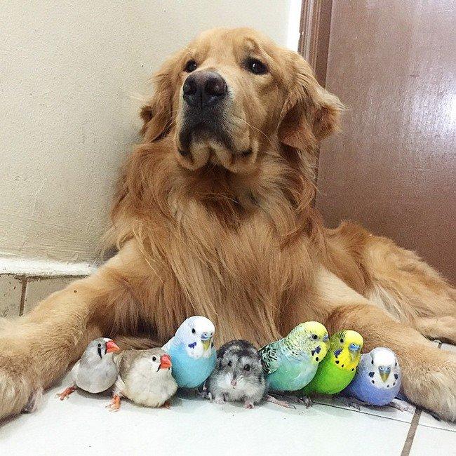 birds dog floor