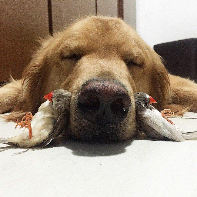 birds dog nose sleeping