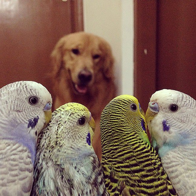 birds dog