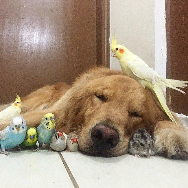 bob sleeping birds