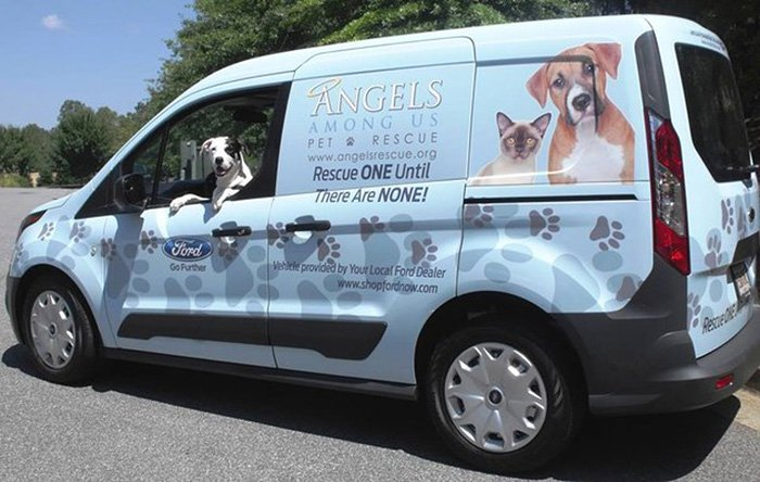 dog-angels