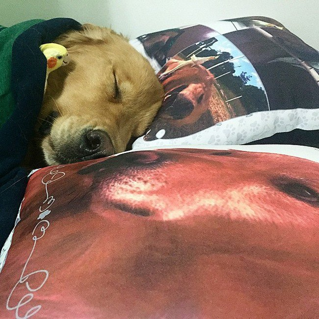 dog bird pillows