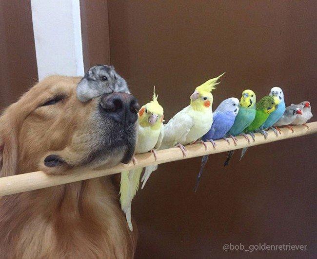 dog hamster birds