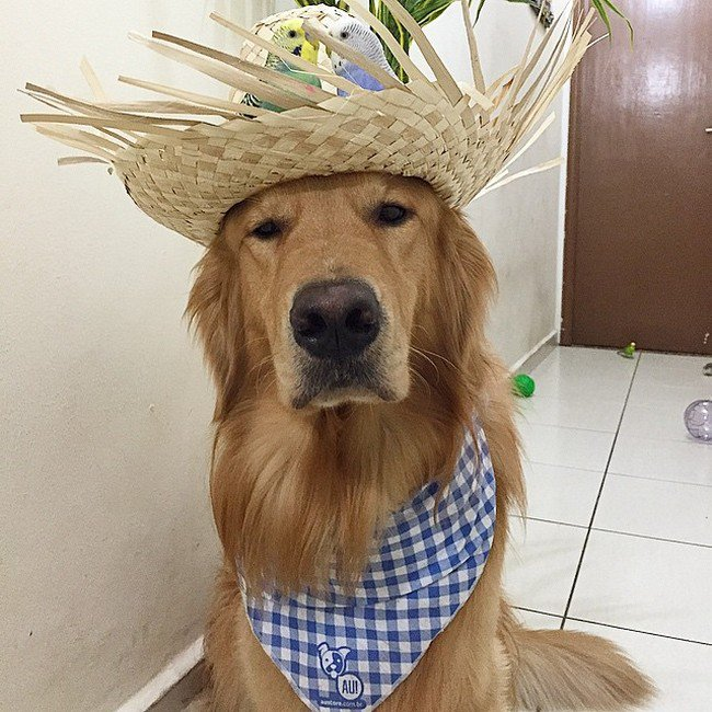 dog hat birds