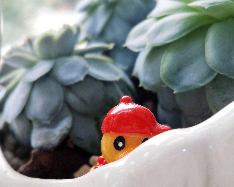 duck plants