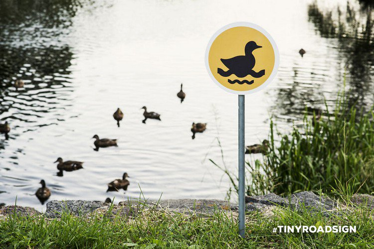ducks swimming sign