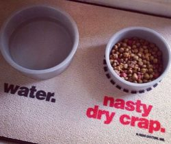 funny pet food mat