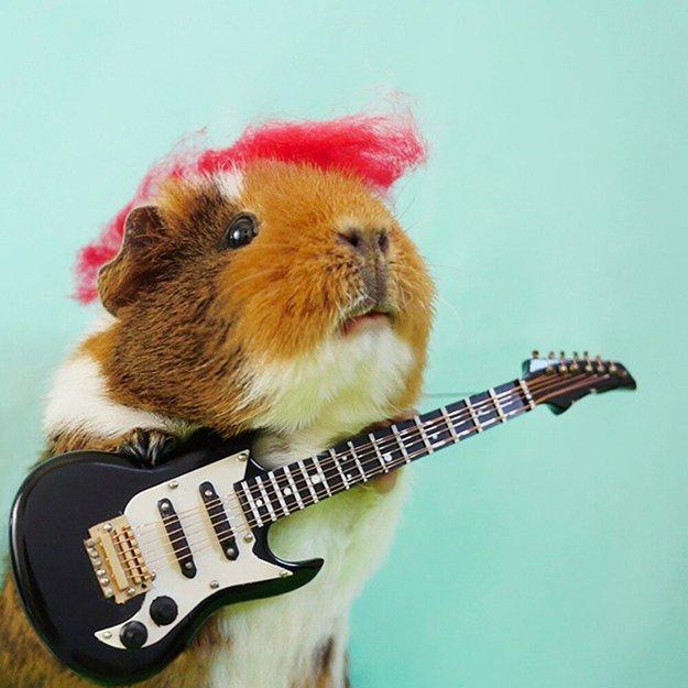 fuzzberta-cosplaying-guinea-pig-guitar