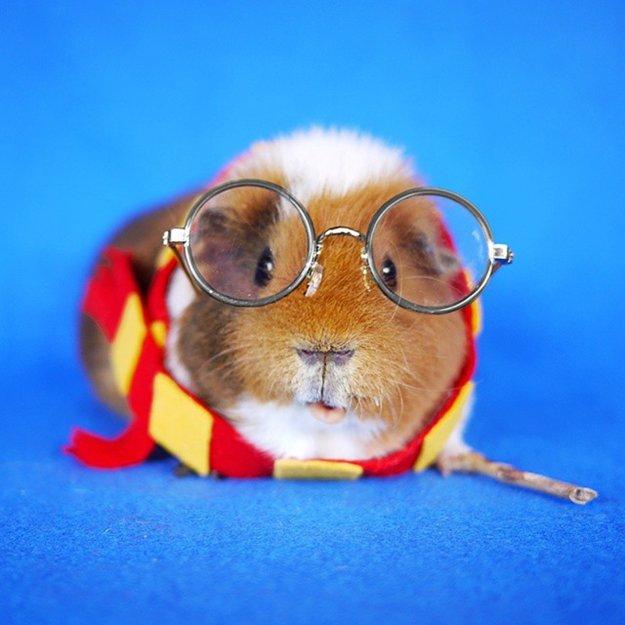 fuzzberta-cosplaying-guinea-pig-harry-potter