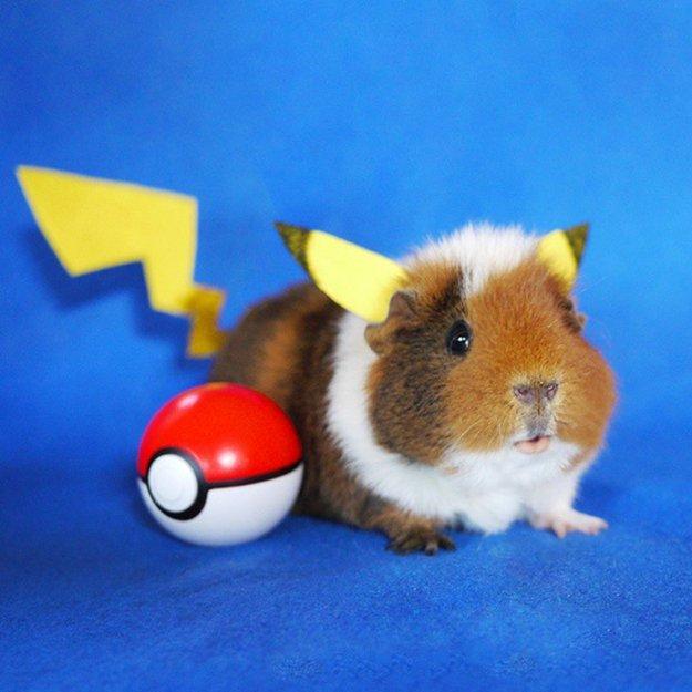 fuzzberta-cosplaying-guinea-pig-pikachu