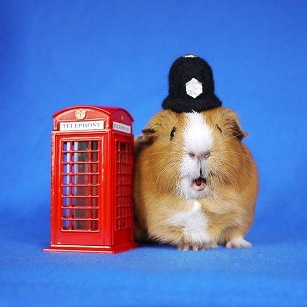 fuzzberta-cosplaying-guinea-pig-police