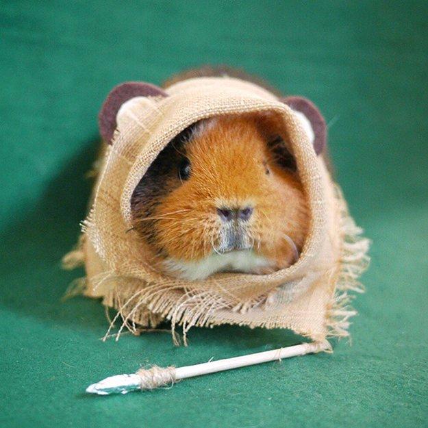 fuzzberta-cosplaying-guinea-pig-star-wars
