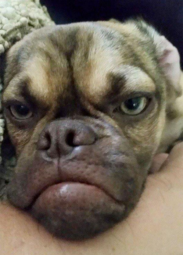 grumpy dog close up