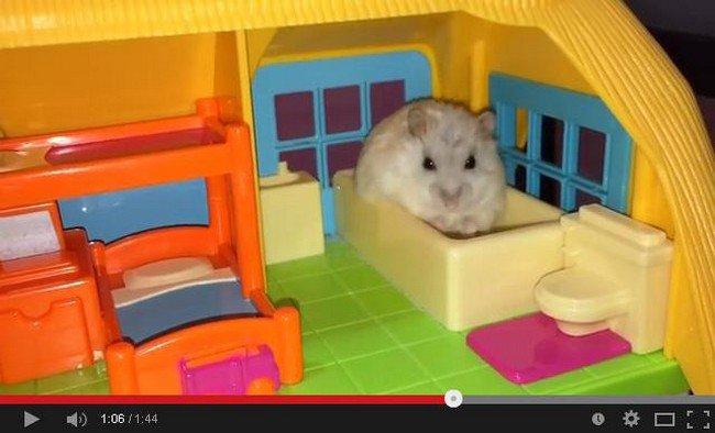 hamster bath
