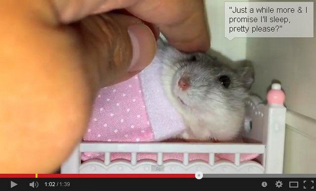 These loveable little hamsters have the cutest home and for Cutest house in the world