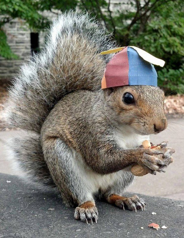 hat squirrel