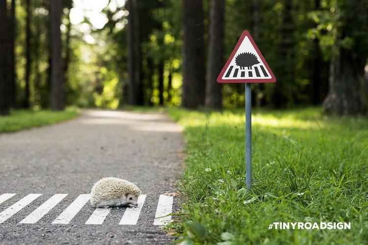 hedgehog crossing sign