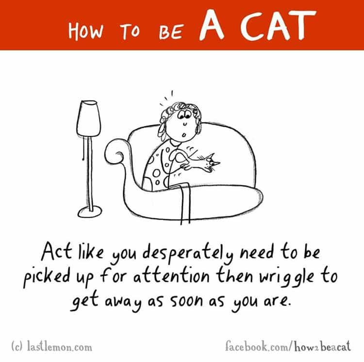 how-to-be-a-cat-attention