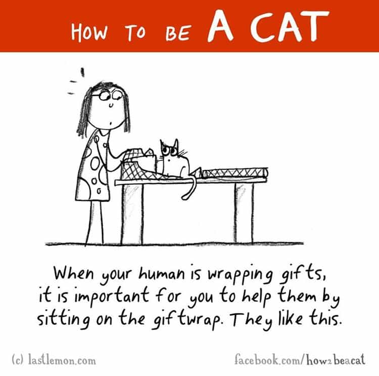 how-to-be-a-cat-giftwrap