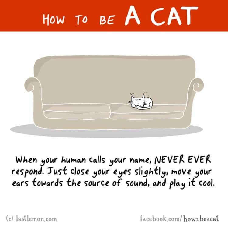 how-to-be-a-cat-name