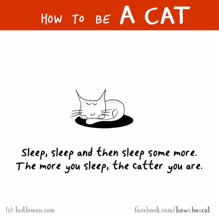 how-to-be-a-cat-snooze