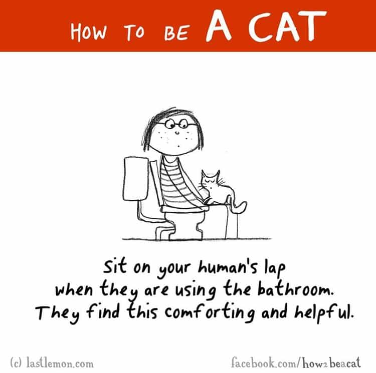 how-to-be-a-cat-toilet