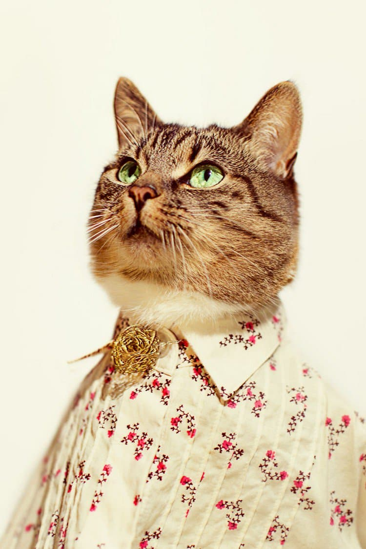 hummus cat flower outfit