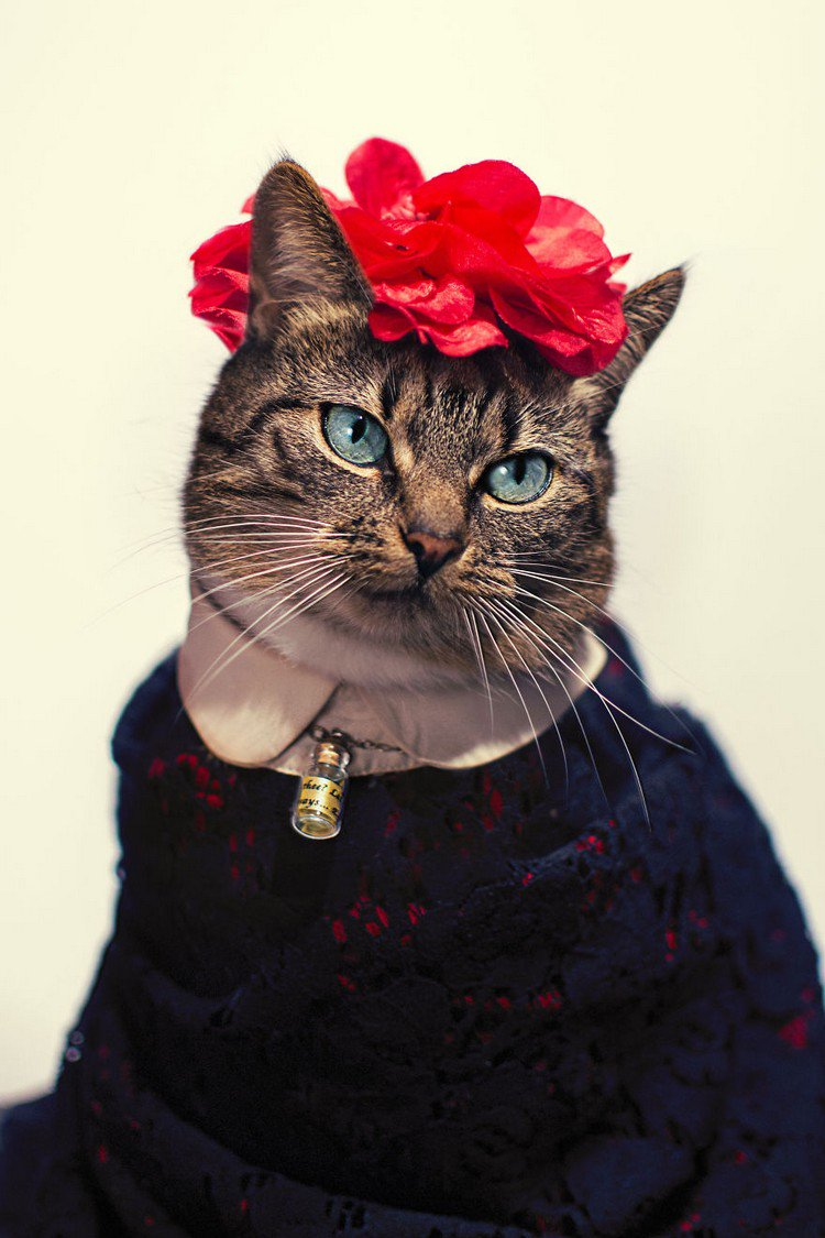 hummus cat frida