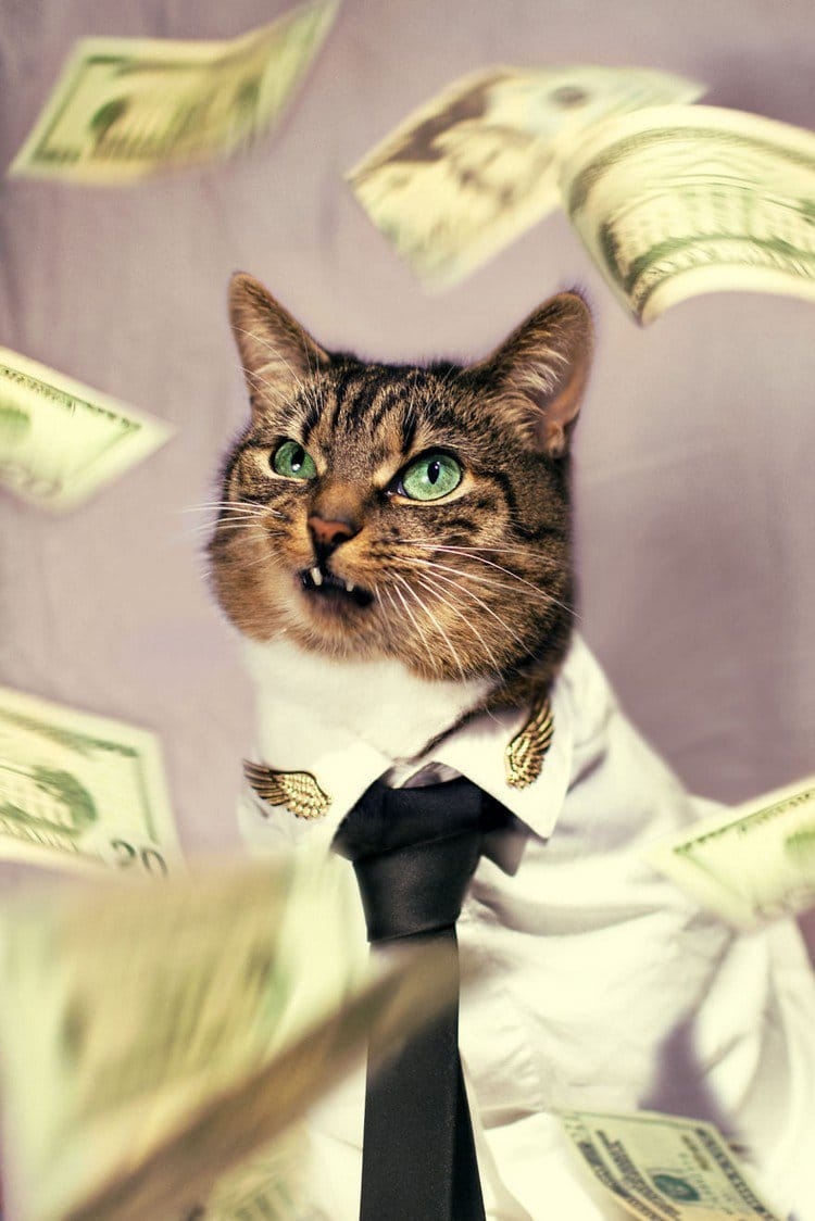 hummus cat money
