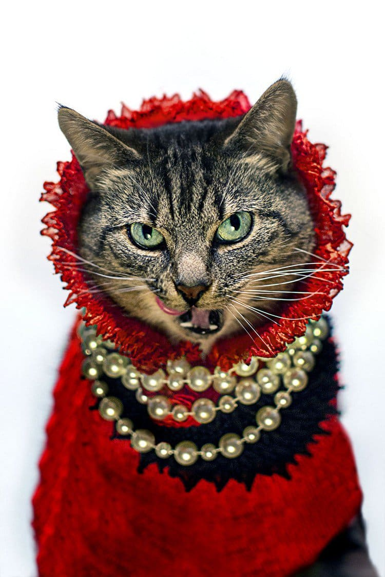 hummus cat red pearls