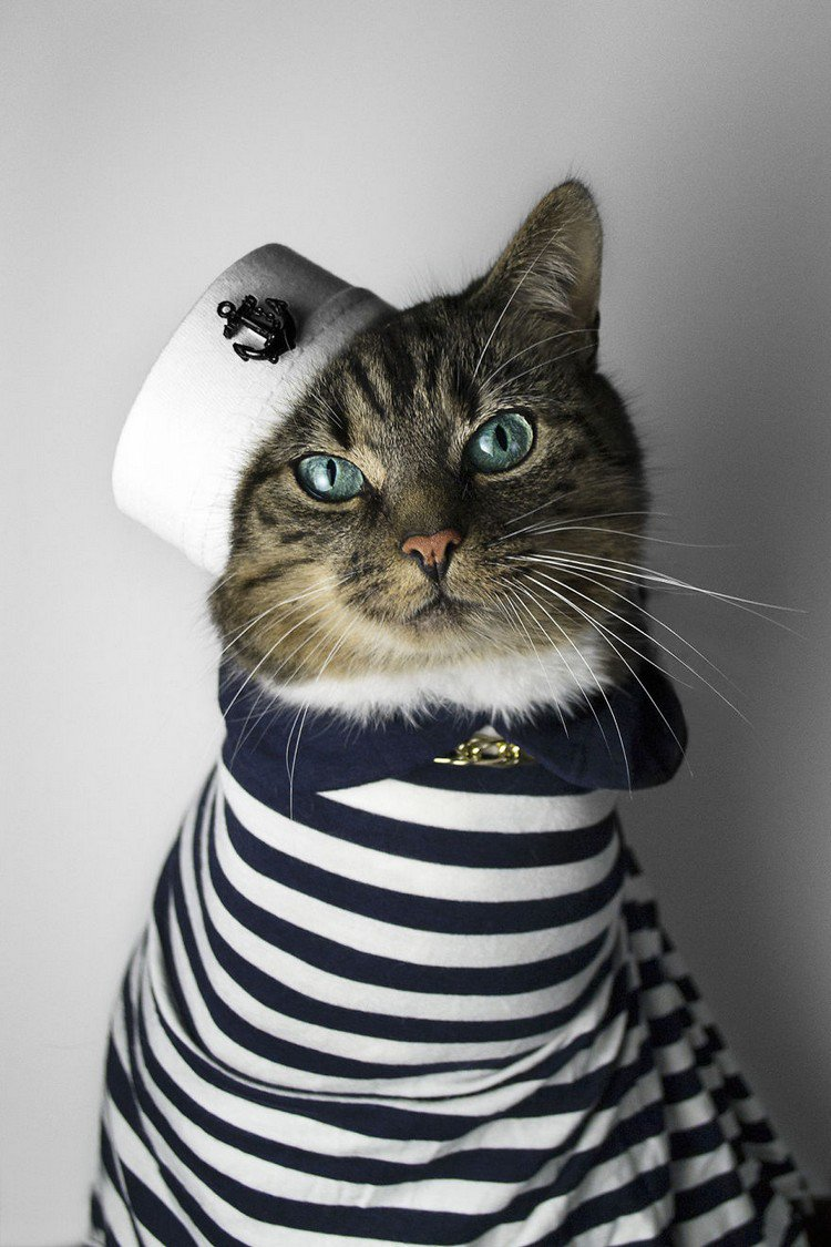 hummus cat sailor