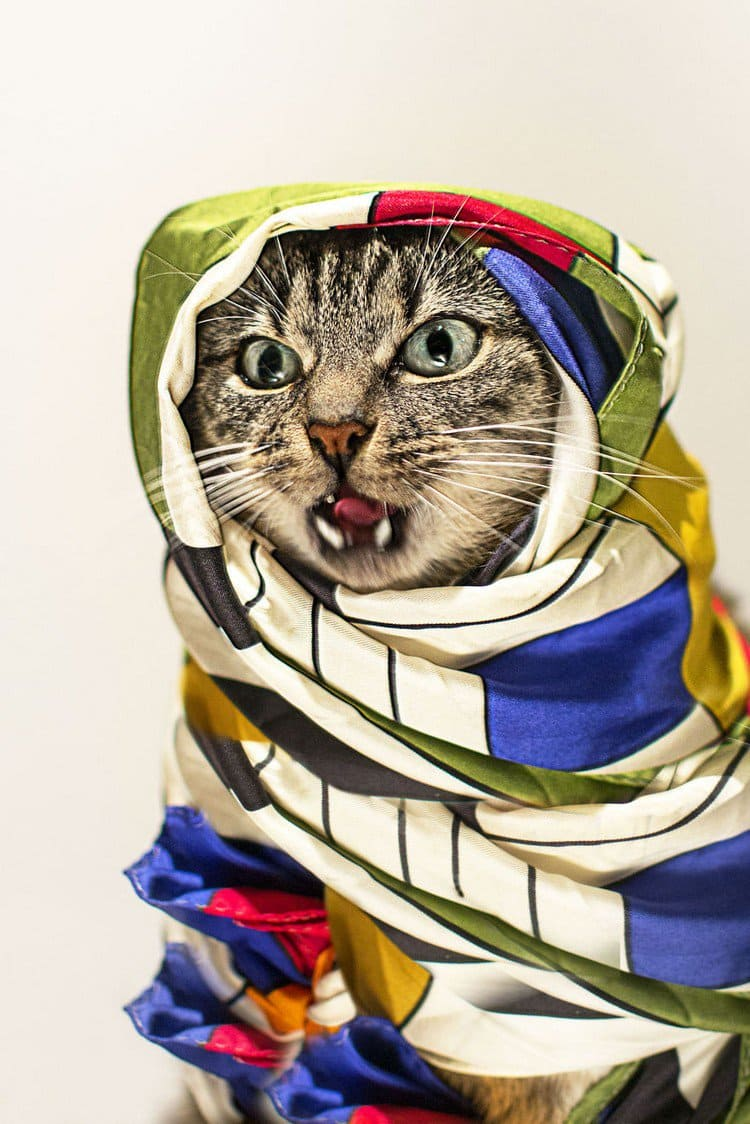 hummus cat scarf